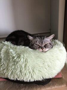 レオンの寝床